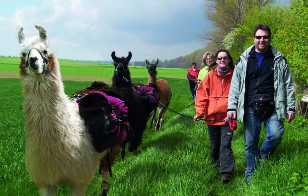 lamatrekking-dorn-duerkheim-lama