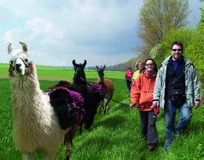 Lama-Trekking-Tour in Dorn-Dürkheim 4 Stunden