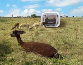 Außergewöhnlich Übernachten im sleeperoo Cube - 1 ÜN (Preis B - Sa) - Kierspe im sleeperoo Cube - inklusive Chillbox - Alpaka Farm