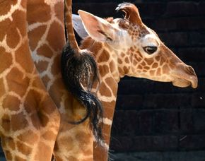 Foto-Tour Köln Zoo im Zoo, ca. 7 Stunden