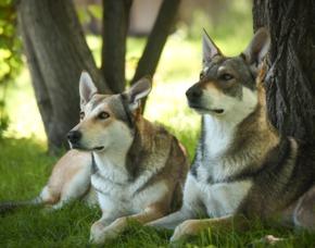 Schlittenhunde-Workshop Büren
