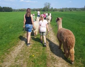 Lama- & Alpakawanderung Jettingen-Scheppach