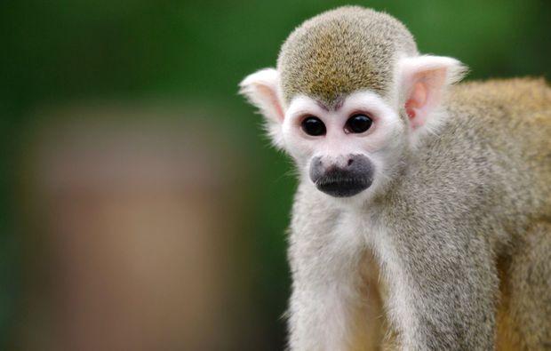fototour-leipzig-cute