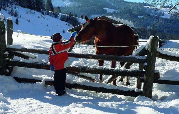 zauberhafte-unterkuenfte-maria-alm-pferde