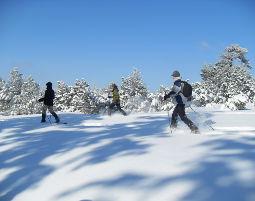 Bild Schneeschuh-Wanderung - Das Gefühl völliger Freiheit