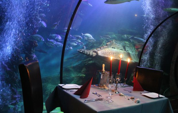 Unter Wasser Dinner Sea Life Königswinter Mydays