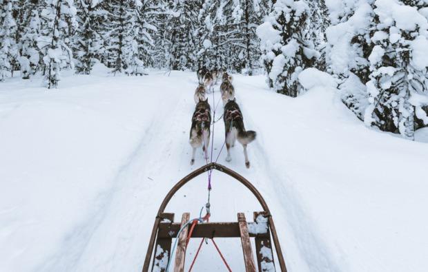 lappland-abenteuerreise-husky-schlittenfahrt-arvidsjaur