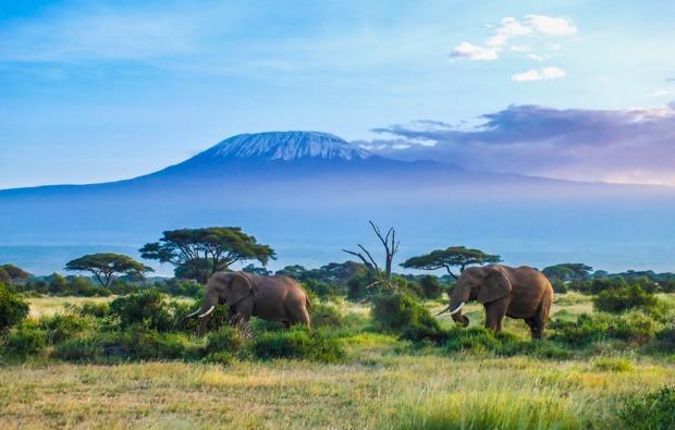 erlebnisreisen-safari-kenia
