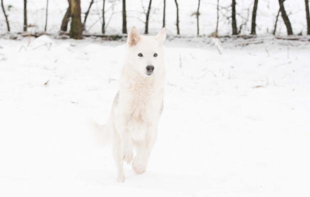 schlittenhundefahrt-neu-benthen-erlebnis