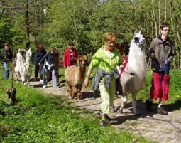5-lama-alpaka-trekking