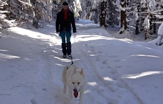 husky-trekking-halberstadt-natur-geniessen