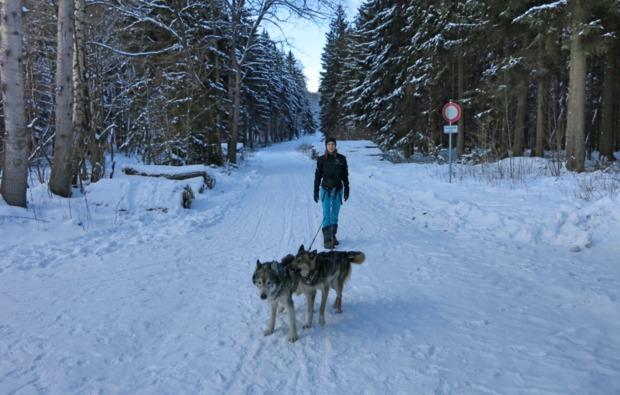 husky-trekking-halberstadt-outdoor