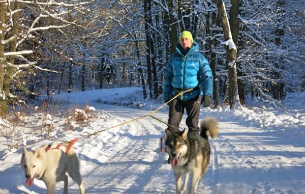 husky-trekking-halberstadt-winterlandschaft