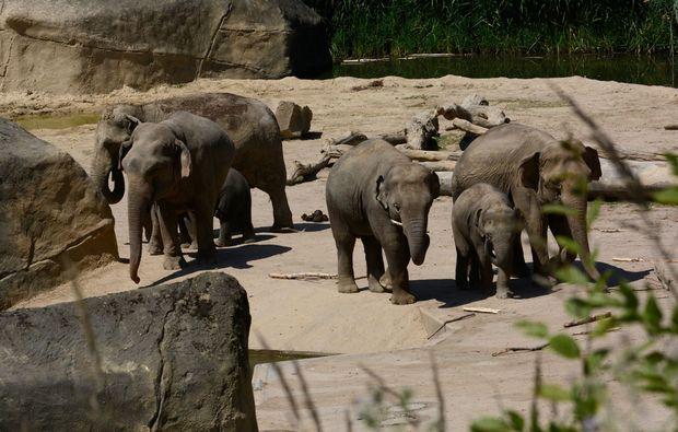 fotokurs-koeln-elefant