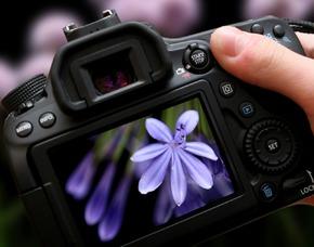 Privater Fotokurs online Fotokurs Live-Einzelcoaching - Ca. 60 Minuten