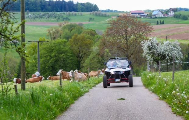 buggy-fahren-meissenheim-bg3
