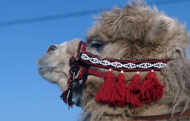 kamel-reiten-sauldorf