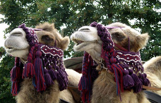 kamelreiten-sauldorf