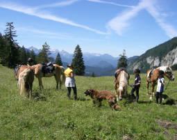 Familien-Abenteuer Haflingerhof Gams - Reitunterricht