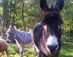Familien-Abenteuer im Heuhotel Heuhotel Fischbeck - Esel- oder Ziegentrekking, Kräuterwanderung