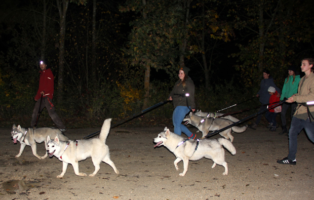 erlebnis-husky-nacht-outdoor