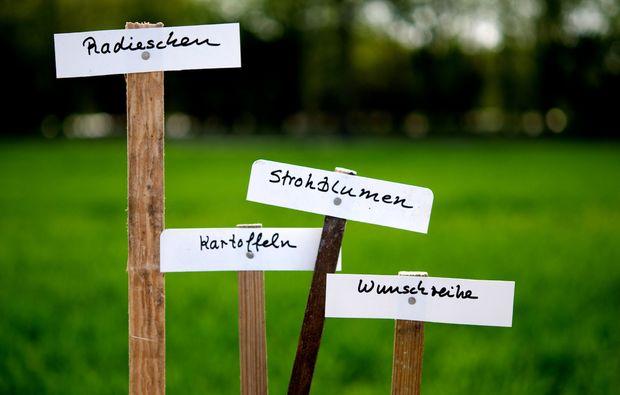 urban-gardening-frankfurt-am-main-bg5