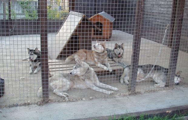 schlittenhunde-workshop-markt-bibart-rudel