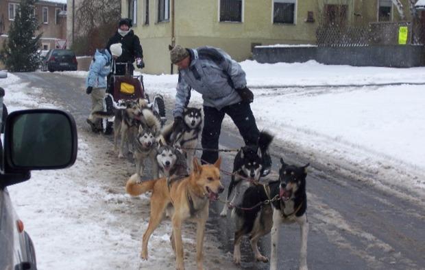 schlittenhunde-workshop-markt-bibart-vorbereitung
