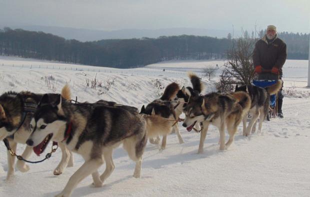 schlittenhundefahrt-diemelsee-adorf-gespann