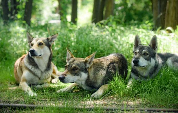 husky-trekking-bueren-bg1
