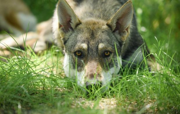 husky-trekking-bueren-bg4