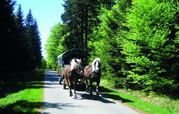 kurzurlaub-rechenberg-bienenmuehle-ortsteil-holzhau-kutsche