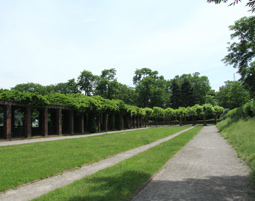 aussergewoehnliche-stadtrundfahrt-koeln-waldweg