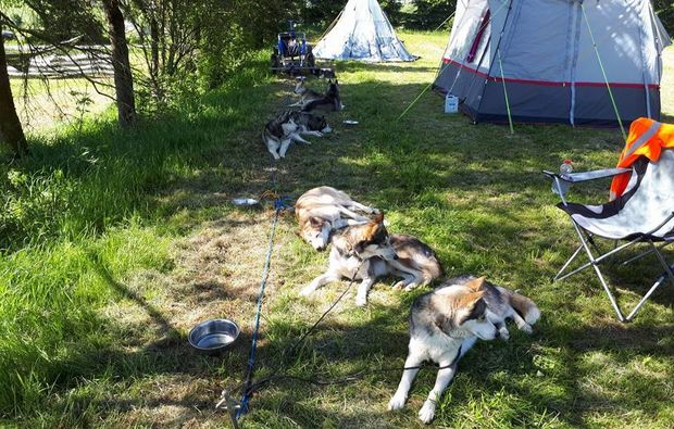 schlittenhunde-workshop-moedingen-camp