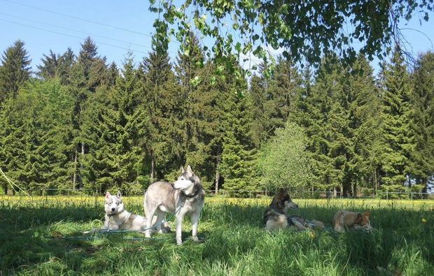 schlittenhunde-workshop-moedingen-weide