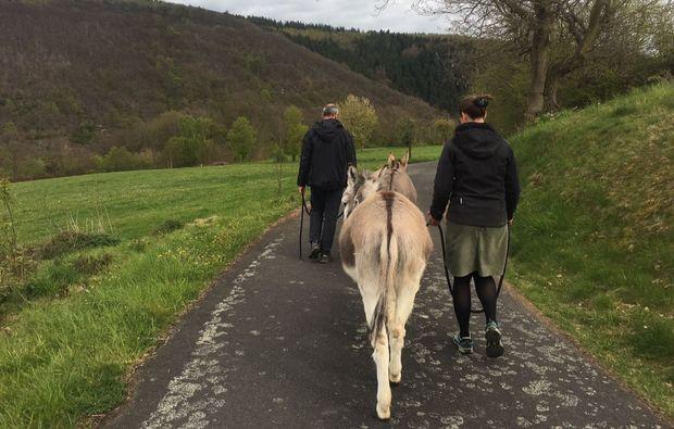 esel-trekking-rurberg-spazieren