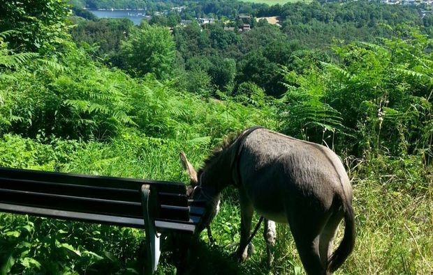 esel-trekking-rurberg-tierabenteuer
