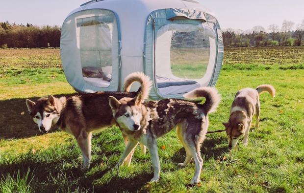 cube-sleeperoo-uebernachtung-peissen-huskies