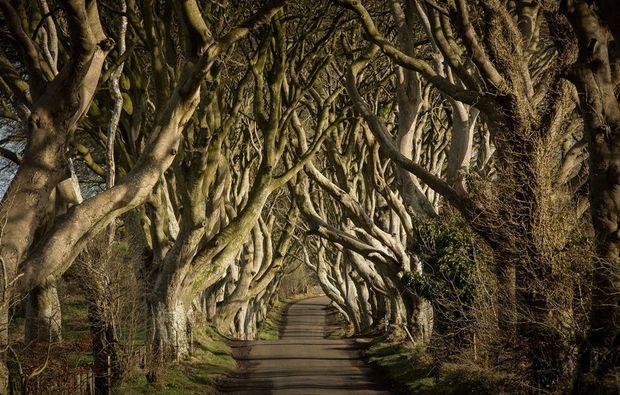 erlebnisreisen-dublin-thrones-reise