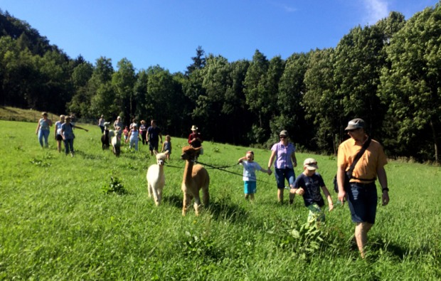 lama-alpakawanderung-st-paul-bg4