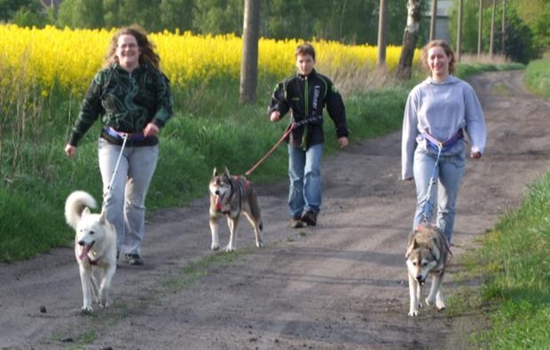 husky-trekking-neu-benthen-spass