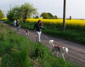 Schlittenhundetrekking - JSMD - Neu Benthen ca. 2-3 Stunden