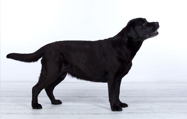 animalisches-fotoshooting-erlangen-hund