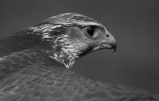 fotokurs-aachen-vogel