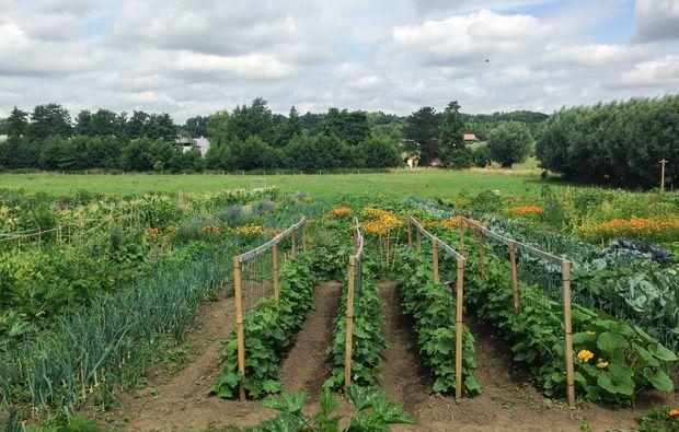 urban-gardening-duesseldorf-volmerswerth-beet