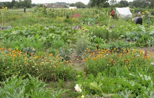 urban-gardening-duesseldorf-volmerswerth-meine-ernte