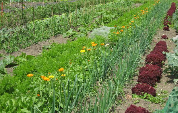 urban-gardening-duesseldorf-volmerswerth-pflanzen