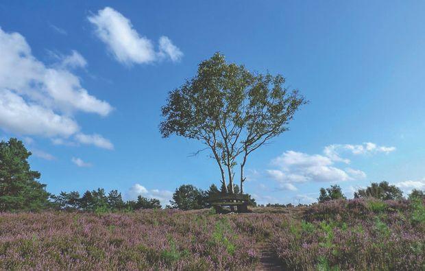 landgut-stemmen-natur