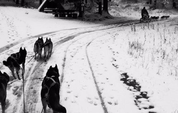 schlittenhundefahrt-tabarz-wald