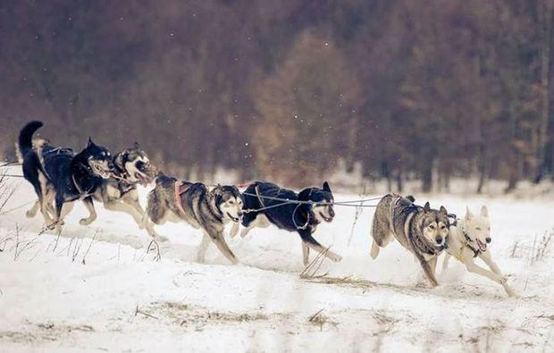 schlittenhundetour-tabarz-husky